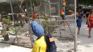 Maya Key bird display